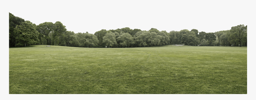 Header Tree Layer - Grass, HD Png Download, Free Download