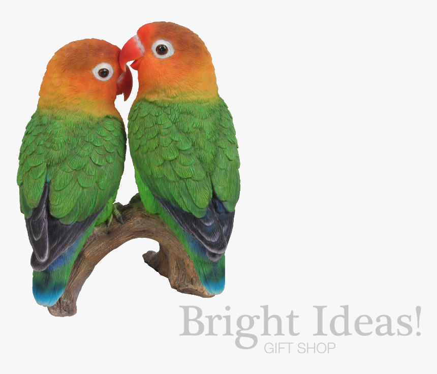 love birds exotic true life vivid arts lovebirds logo love bird hd hd png download kindpng love birds exotic true life vivid arts