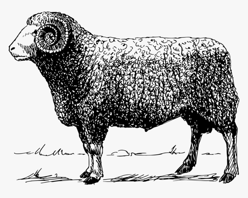 Animal - Ram Vector Png, Transparent Png, Free Download