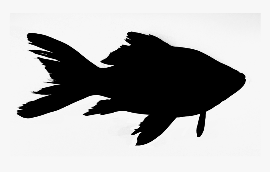 Friday Night Fish Fry - Fish Silhouette Png, Transparent Png, Free Download