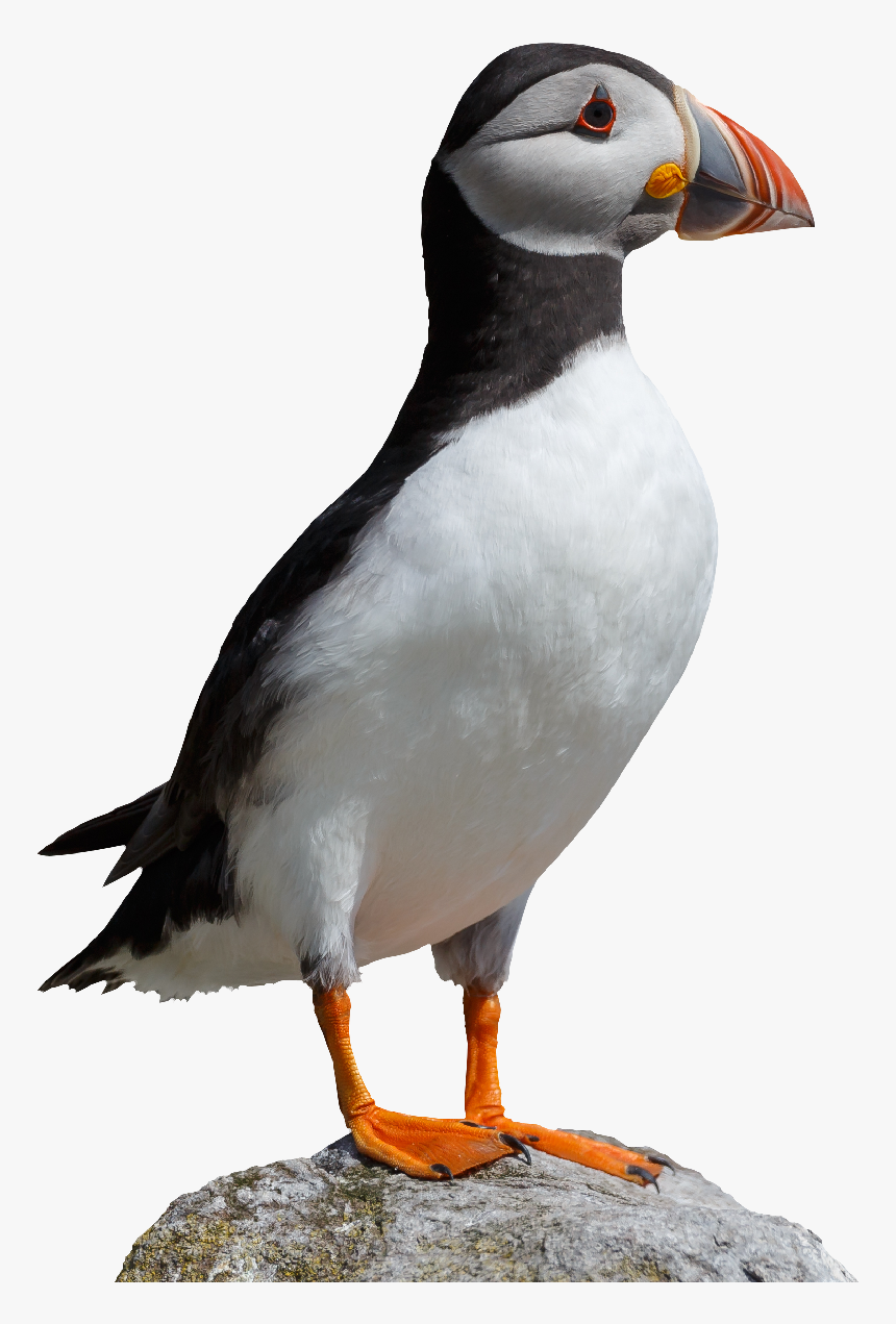 National Trust For Jersey Transparent Background - Puffin Png, Png Download, Free Download