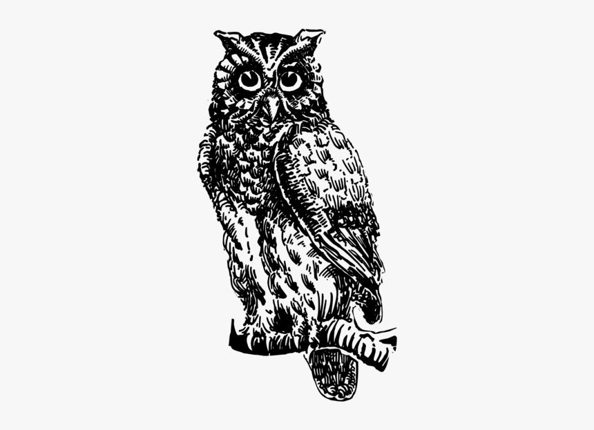 Owl Art Visual Arts Gambar Burung Hantu Hitam Putih Hd Png