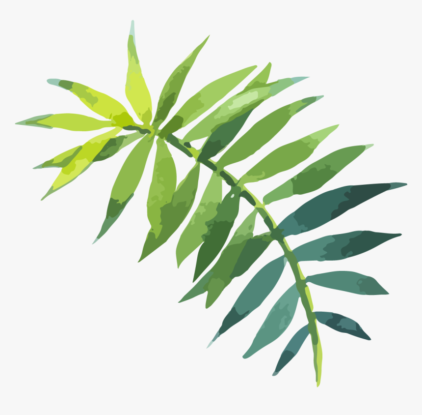 Twig Vector Curry Leaf Watercolor Tropical Leaves Png Transparent Png Kindpng Find the perfect tropical leaf stock illustrations from getty images. twig vector curry leaf watercolor