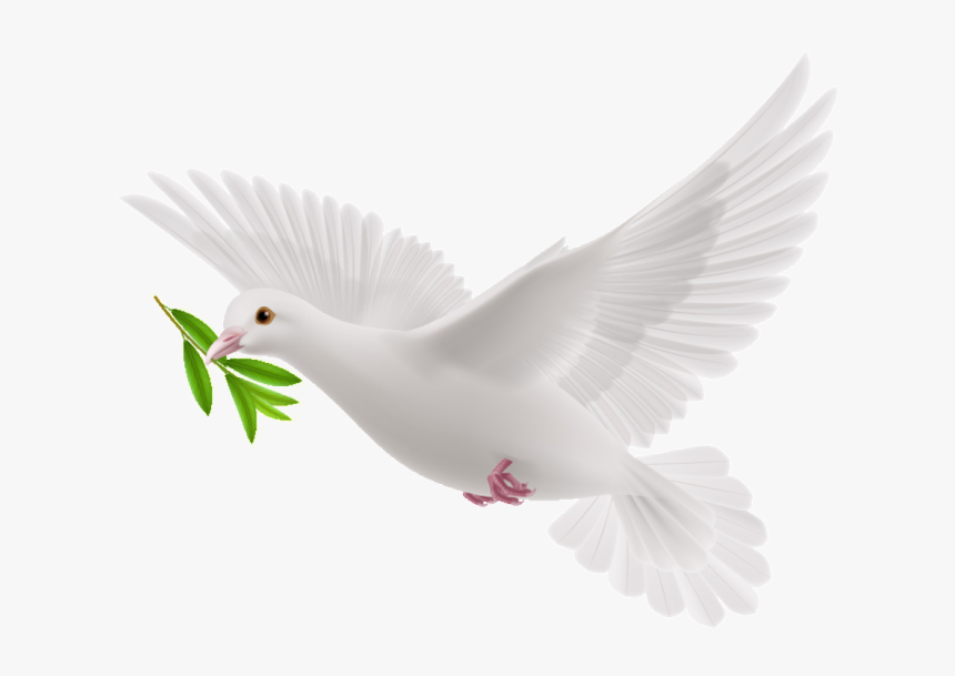White Flying Pigeon Png, Transparent Png, Free Download