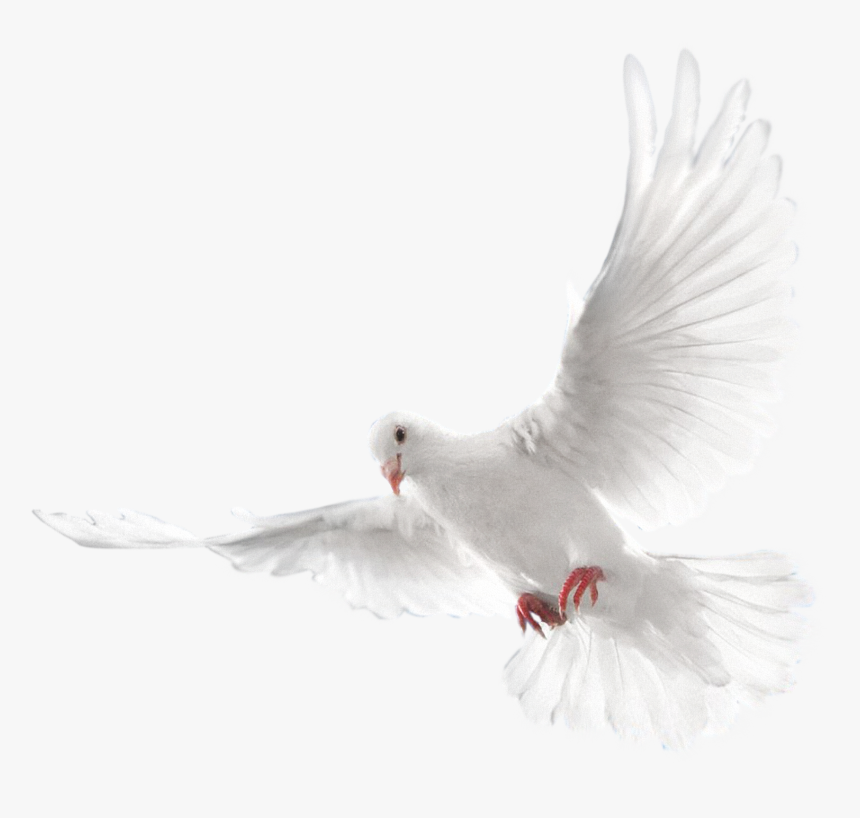 White Flying Pigeon Png Image - Eid Mubarak Editing Background, Transparent Png, Free Download