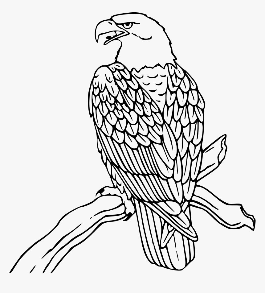 - Mexican Eagle Drawing Flag Coloring Page Free Download - Bald