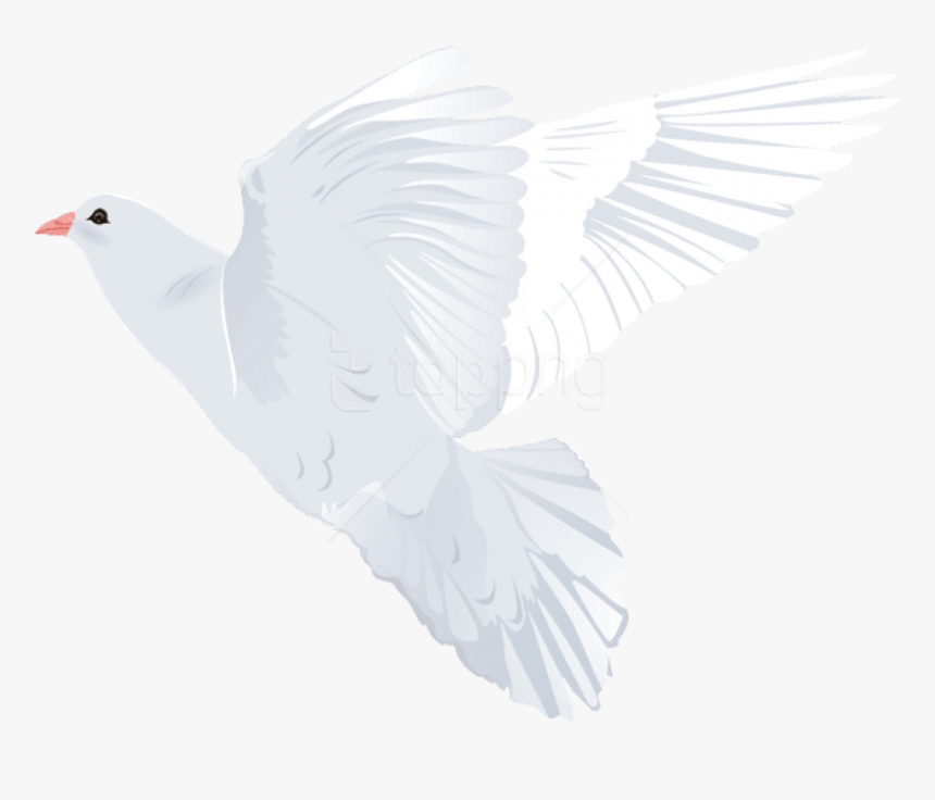 Pigeons And Doves, HD Png Download, Free Download