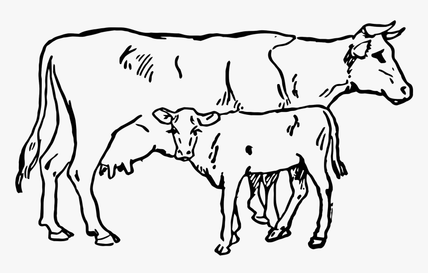 Beef Vector Cow Indian Clip Royalty Free Download - Cow And Calf Sketch, HD Png Download, Free Download