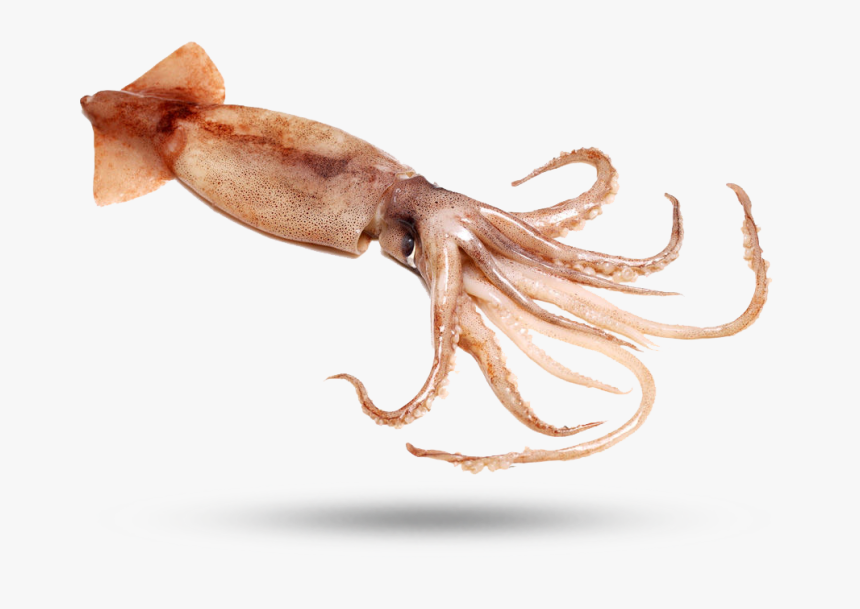 Squid - Giant Squid, HD Png Download, Free Download