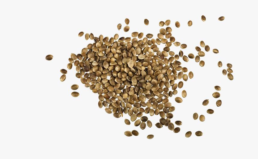 Hemp Seeds Png Images - Hemp Seed Png, Transparent Png - kindpng