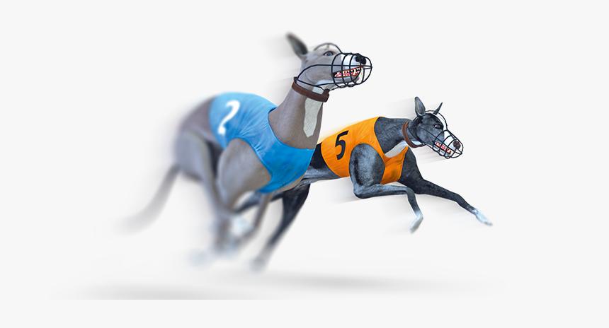 Virtual Dog Racing, HD Png Download, Free Download