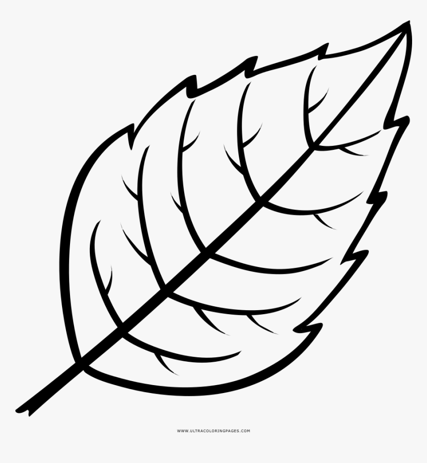It is a graphic of Leaves Coloring Pages Printable pertaining to floral leaves