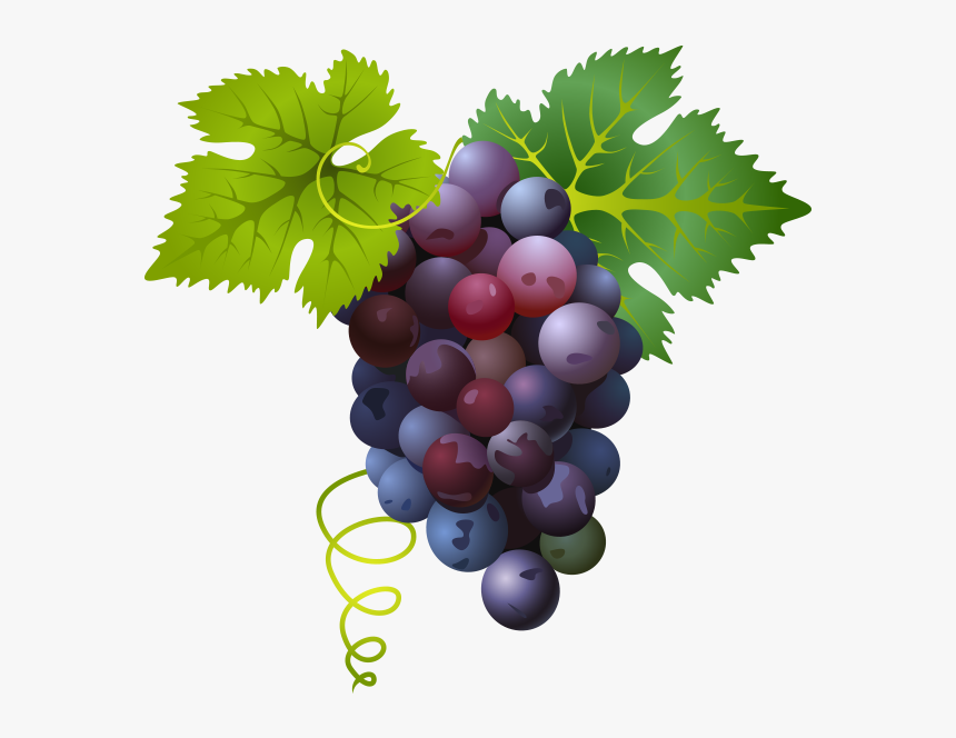 Common Grape Vine - Grape Png, Transparent Png, Free Download