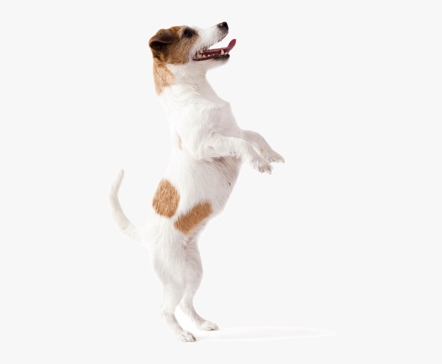 Dog Jumping Up - Dog Catches Something, HD Png Download, Free Download