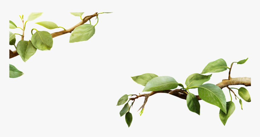 Transparent Spring Leaves - Tree Branch With Leaf Png, Png Download, Free Download