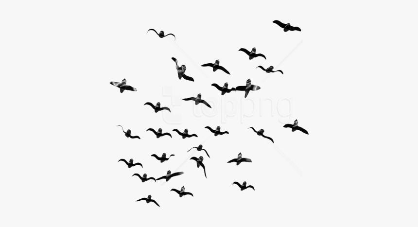 Flock,bird Migration,bird,animal Migration,sky,black - Flock Of Birds Flying Png, Transparent Png, Free Download
