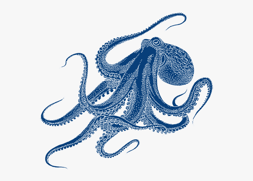 Oktopus Png Project Octopus - Octopus Transparent Png Drawing, Png Download, Free Download