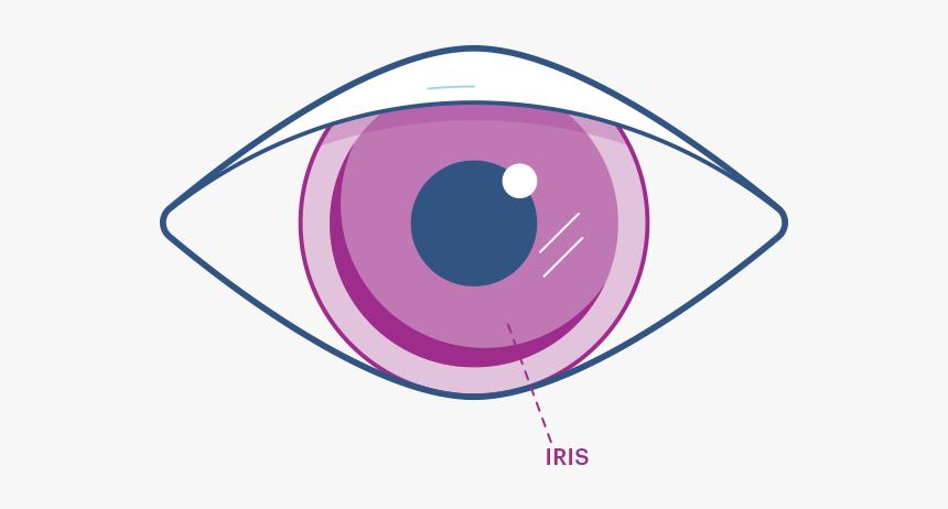 Eye Iris Png, Transparent Png, Free Download