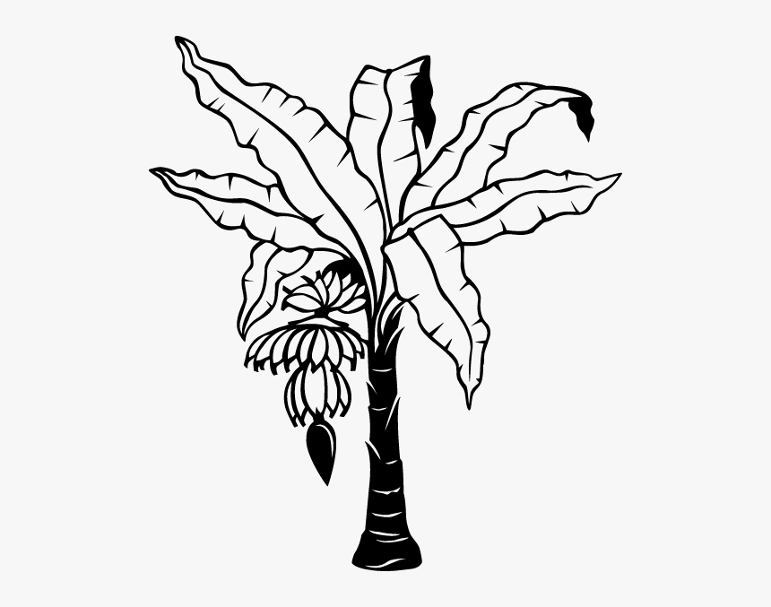 Free Coloring Pages Of Banana Plant - Outline Banana Tree ...