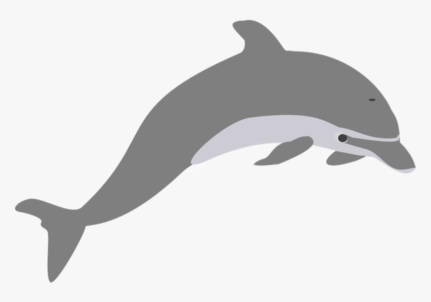 Delfín, Salto, Gris, Elegante - Transparent Dolphin Clip Art, HD Png Download, Free Download