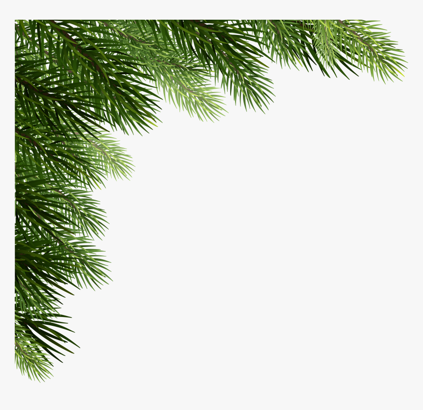 Transparent Pine Cone Clip Art - Branch Christmas Tree Png, Png Download, Free Download