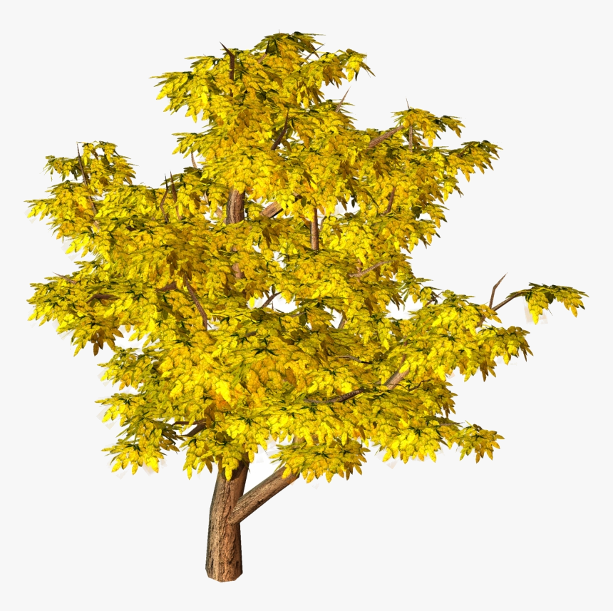 Fall Tree Trees Top View Yellow Clipart Hd Background - Tree Png Hd Background, Transparent Png, Free Download
