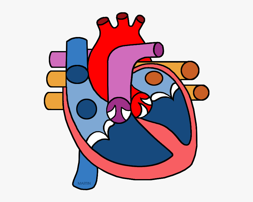 Science Clip Art By Phillip Martin - Heart Circulatory System Clipart, HD Png Download, Free Download