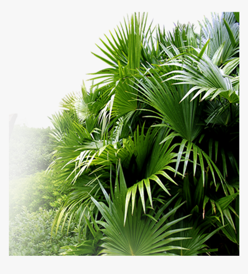 Palm Tree Garden Psd, Hd Png Download - Garden Png Hd, Transparent Png, Free Download