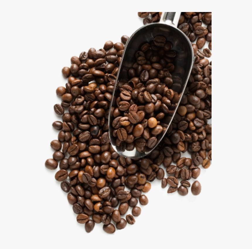 Coffee Beans Png Free Download - Coffee Beans Image Png, Transparent Png, Free Download