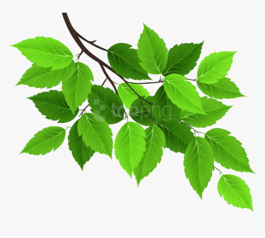 Tree Png Leaf Tree Leaves Clipart Png Transparent Png Kindpng