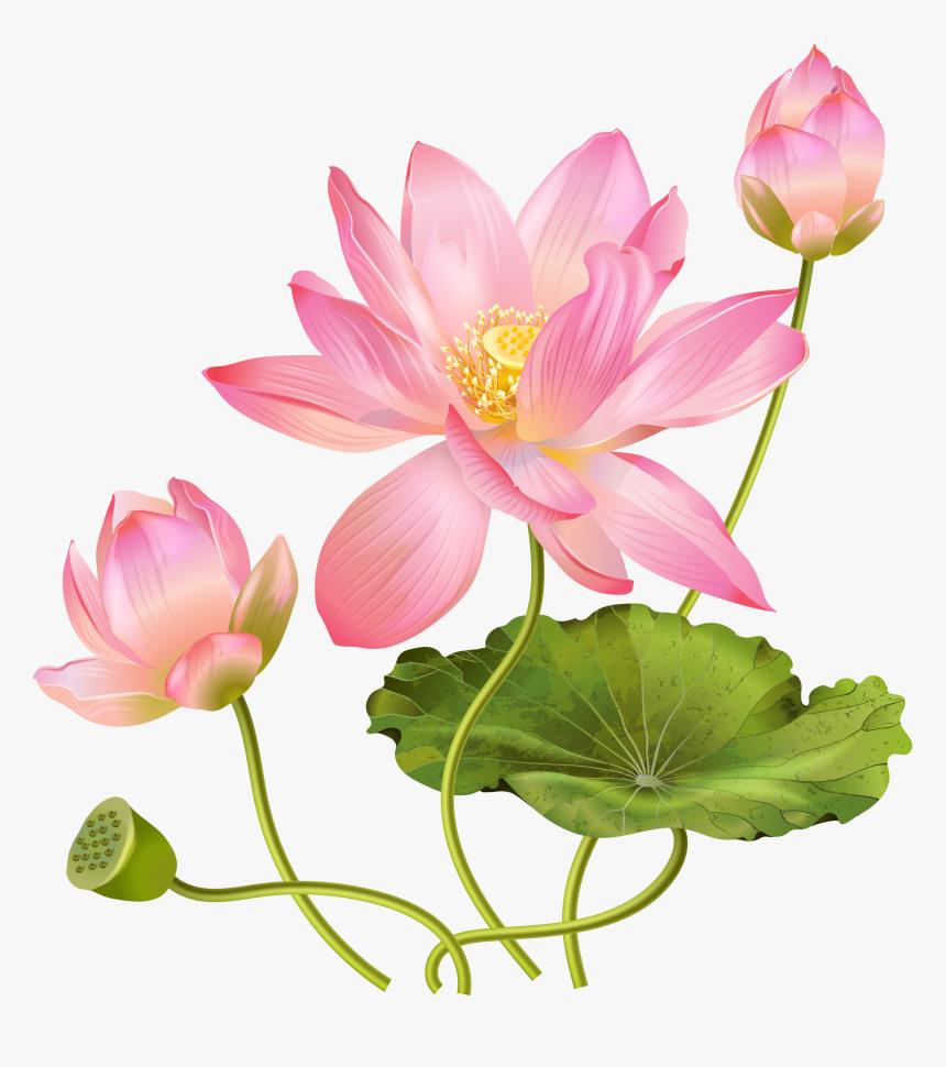 Lotus Flower Png - Lotus Flower Png Free, Transparent Png, Free Download