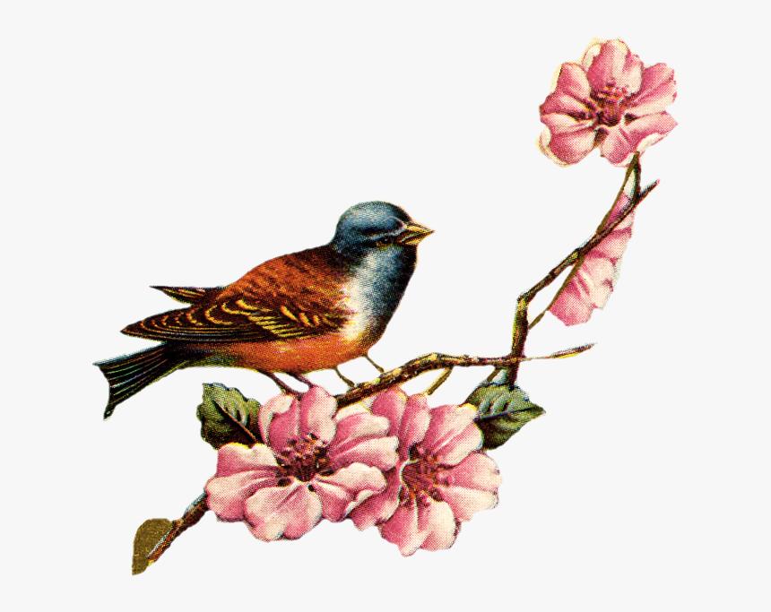 Transparent Vintage Frames Png - Vintage Bird And Flowers, Png Download, Free Download