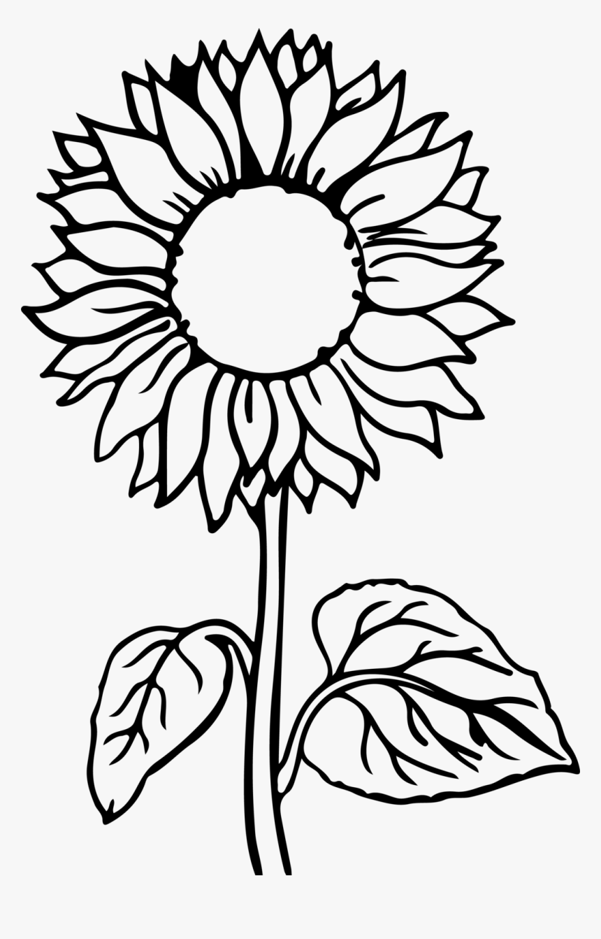 Sunflower Flower Coloring Pages, HD Png Download - kindpng