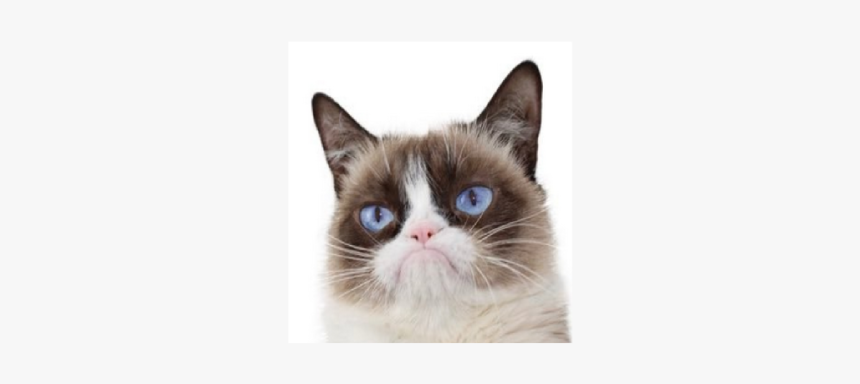 Grumpy Cat Dead Aged - Snowshoe, HD Png Download, Free Download