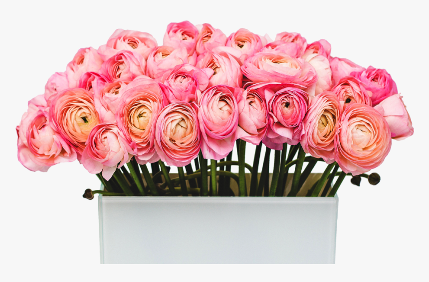 Transparent Buttercup Flower Png - Garden Roses, Png Download, Free Download