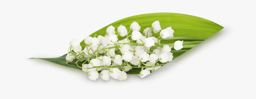 Transparent Bouquet Lily Of The Valley Png, Png Download, Free Download
