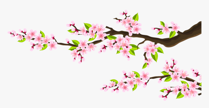 Pink Flower Branches - Cherry Blossom, HD Png Download, Free Download