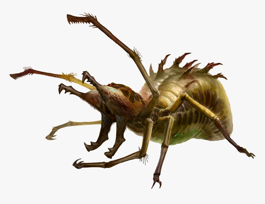 Insect, HD Png Download, Free Download