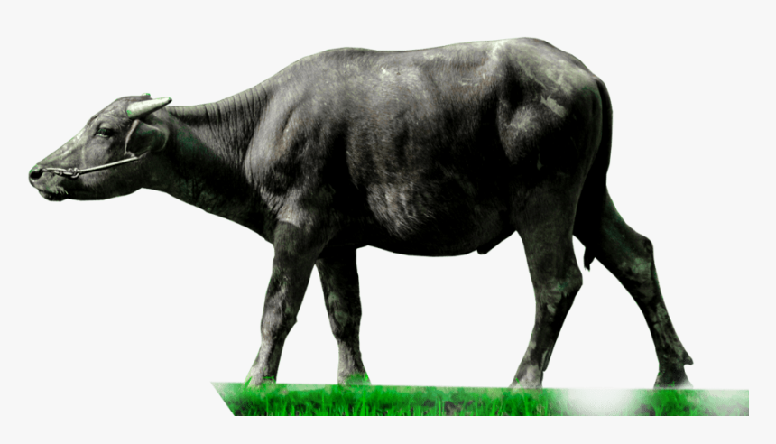 Transparent Cartoon Animals Png - Indian Buffalo Png, Png Download, Free Download