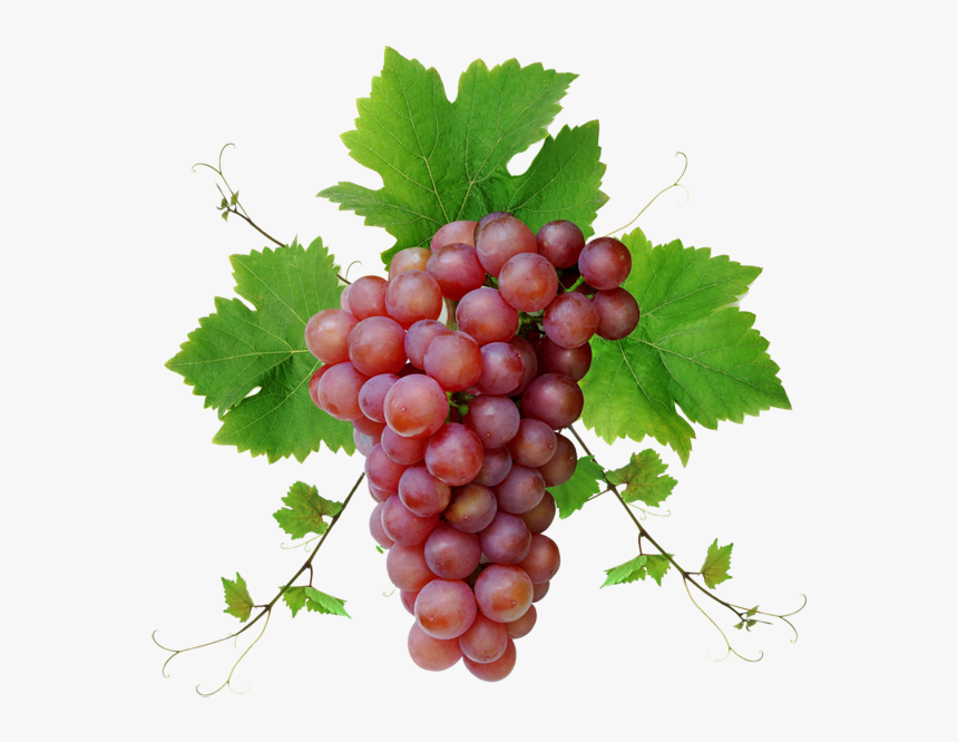 Grape Png Image Download, Free Picture - Grapes Images Png, Transparent Png, Free Download