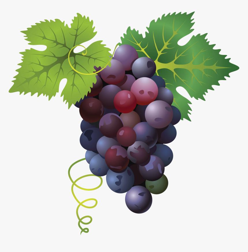 Grape Png, Transparent Png, Free Download