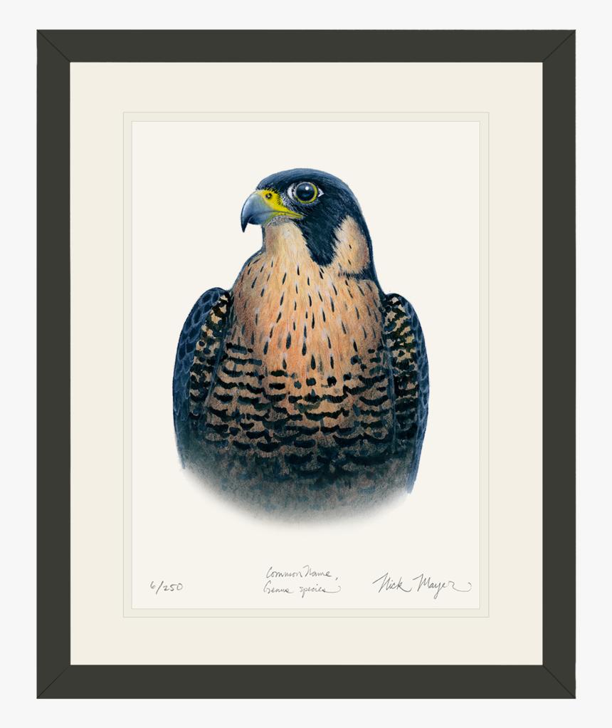 Peregrine Falcon Original Watercolor Painting - Hawk, HD Png Download, Free Download