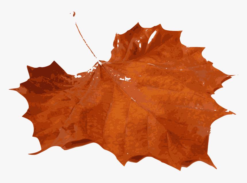 Tree,leaf,maple Leaf - Orange Maple Leaf Png, Transparent Png, Free Download