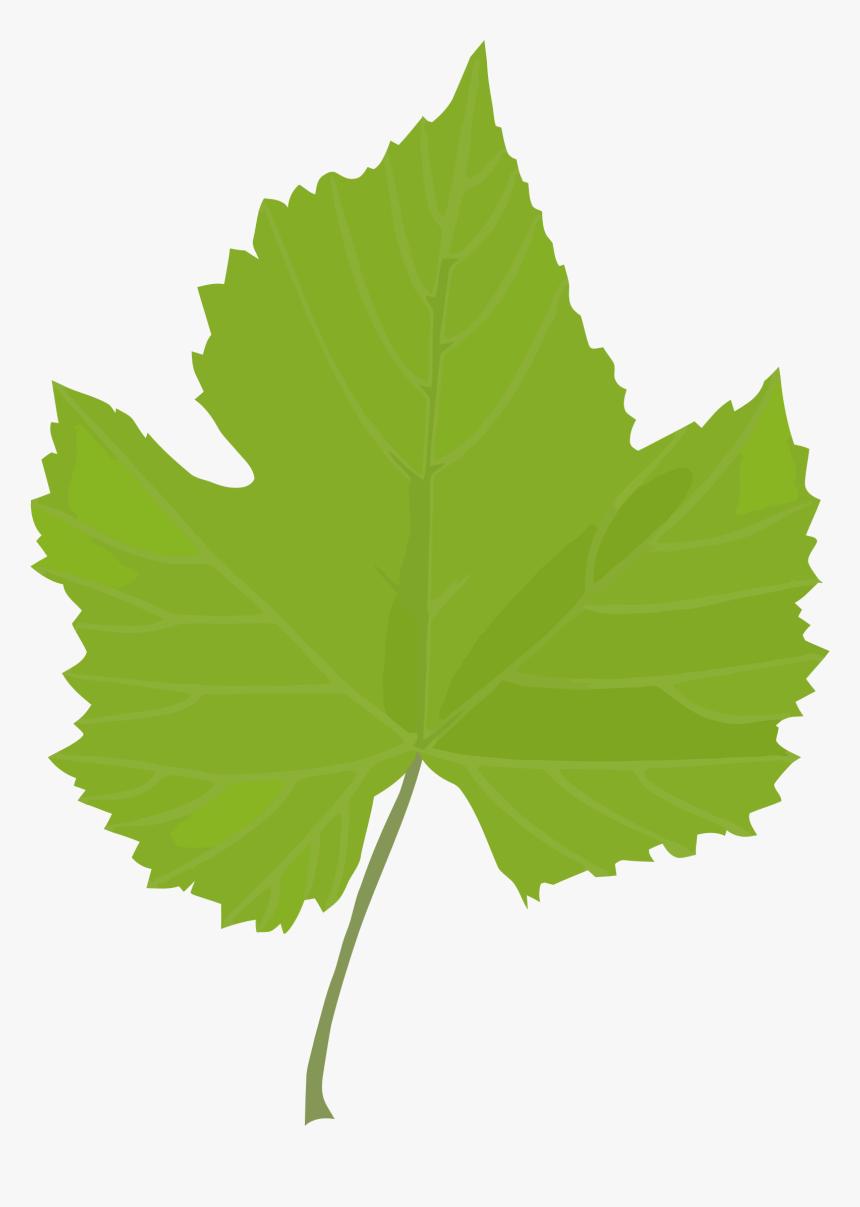 Leaf Common Grape Vine Grape Leaves Plant Stem Plants - Clip Art Grapes Leaves, HD Png Download, Free Download