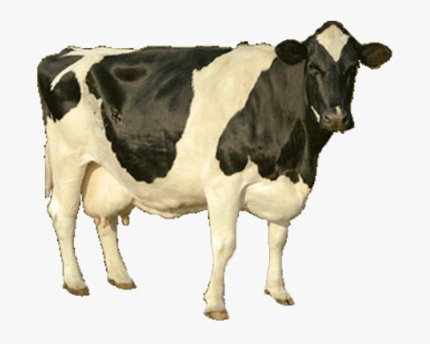 Cow Png Image - Cow Hd Image Png, Transparent Png, Free Download