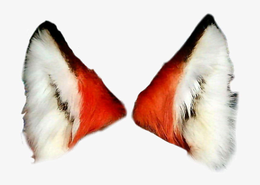 #freetoedit #fox #foxears - Fox Ears Transparent Background, HD Png Download, Free Download