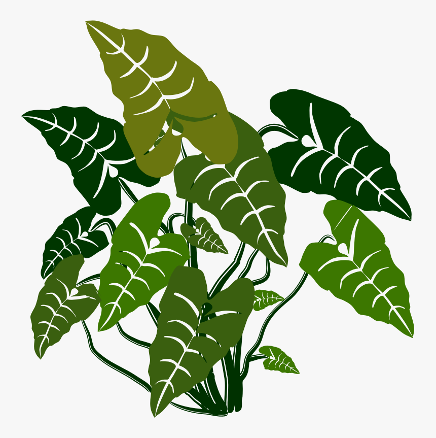 Elephant Ears - Elephant Ear Plant Vector, HD Png Download, Free Download