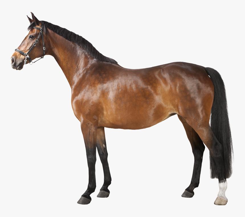 Horse Png, Transparent Png, Free Download