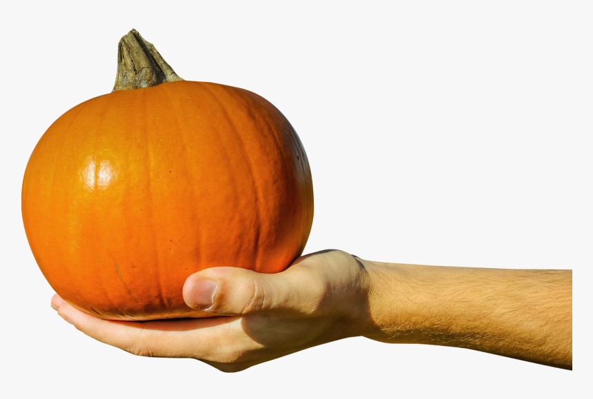 Hand Holding A Pumpkin, HD Png Download, Free Download