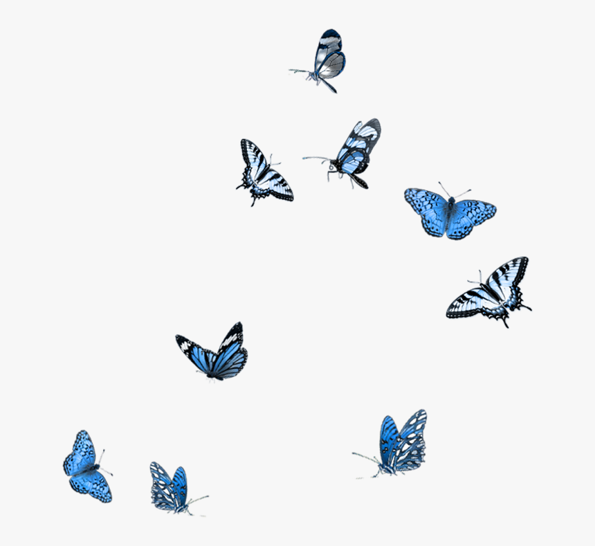 Butterfly Photography Clip Art - Flying Blue Butterfly Png, Transparent Png, Free Download